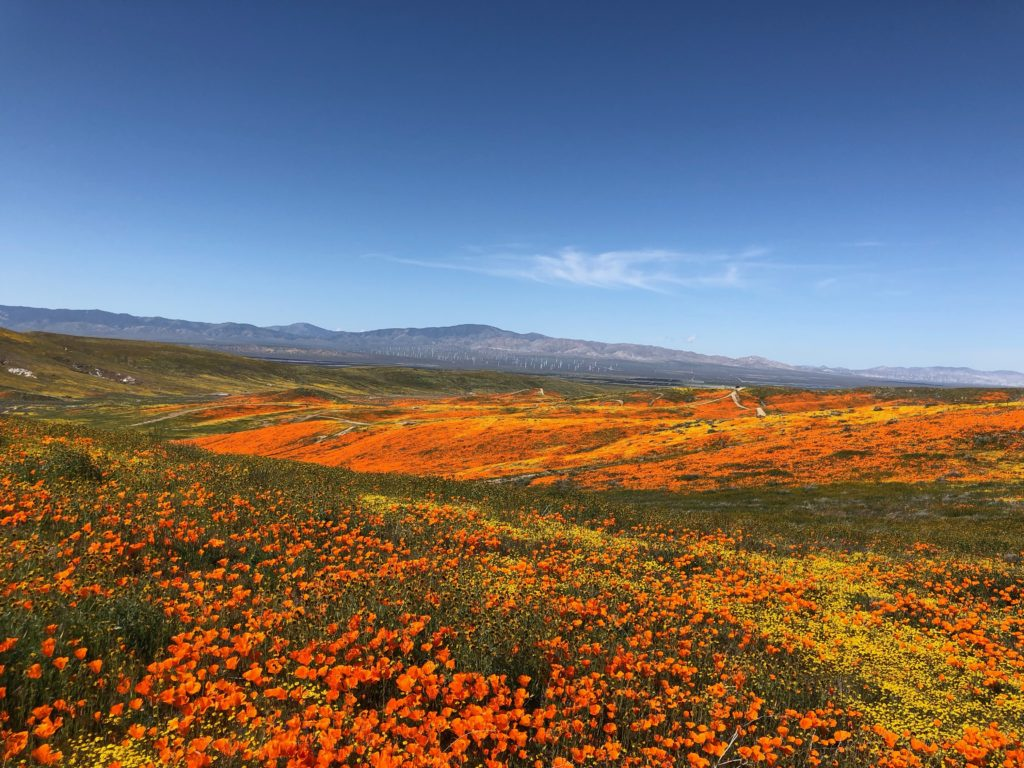 Super Bloom LA 2019