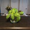 Horticulture: Propagating Trader Joe's Basil Plant
